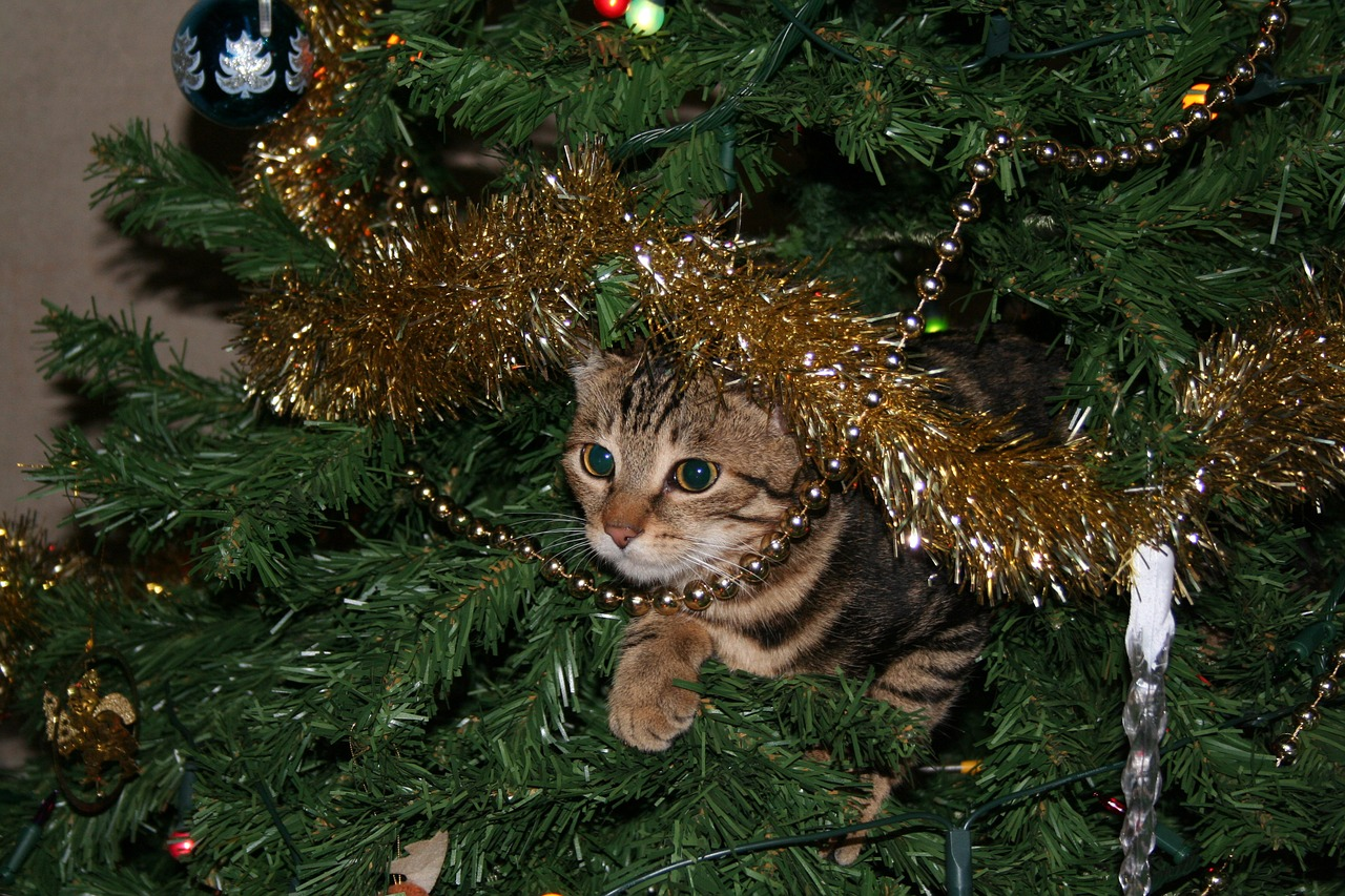 cat christmas safety
