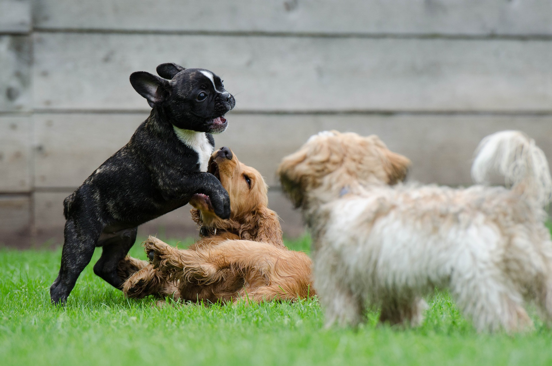 Dog Boarding - Play Time!