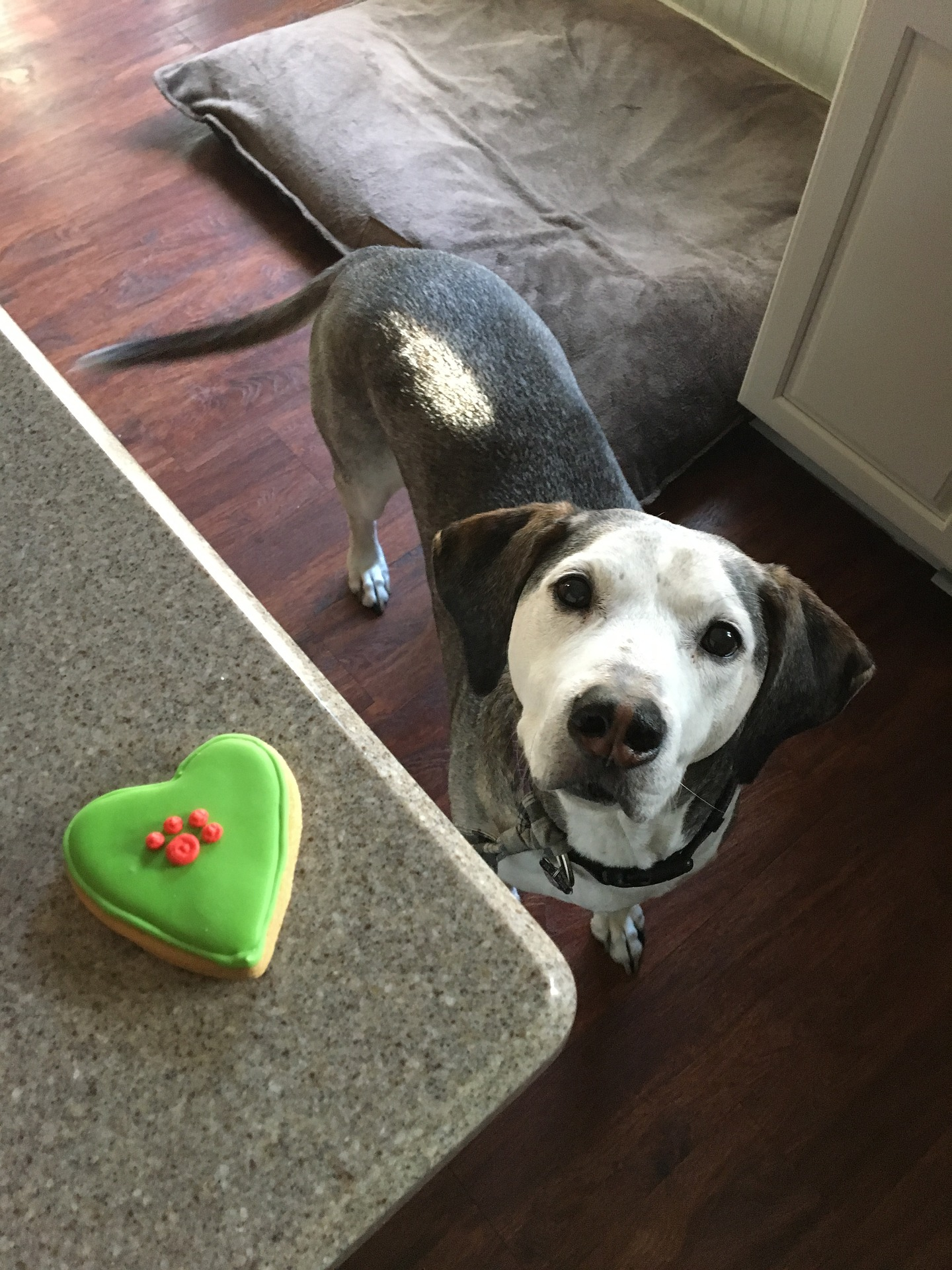 Homemade Dog Treats Cookie