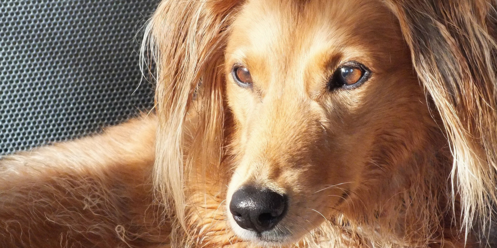 23 Amazing Facts About Dogs You Probably Didn't Know