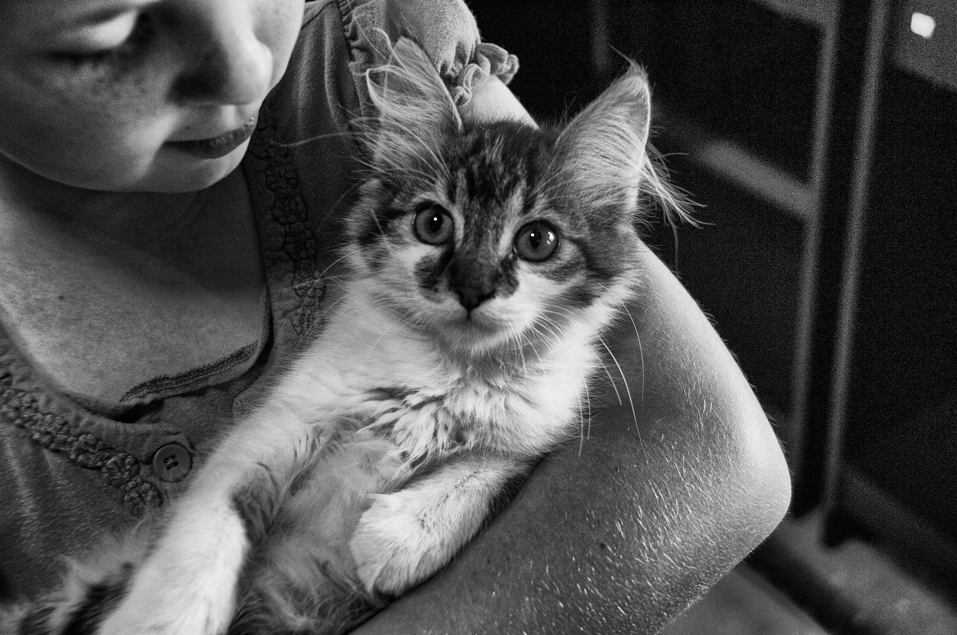 Not all cats appreciate snuggles