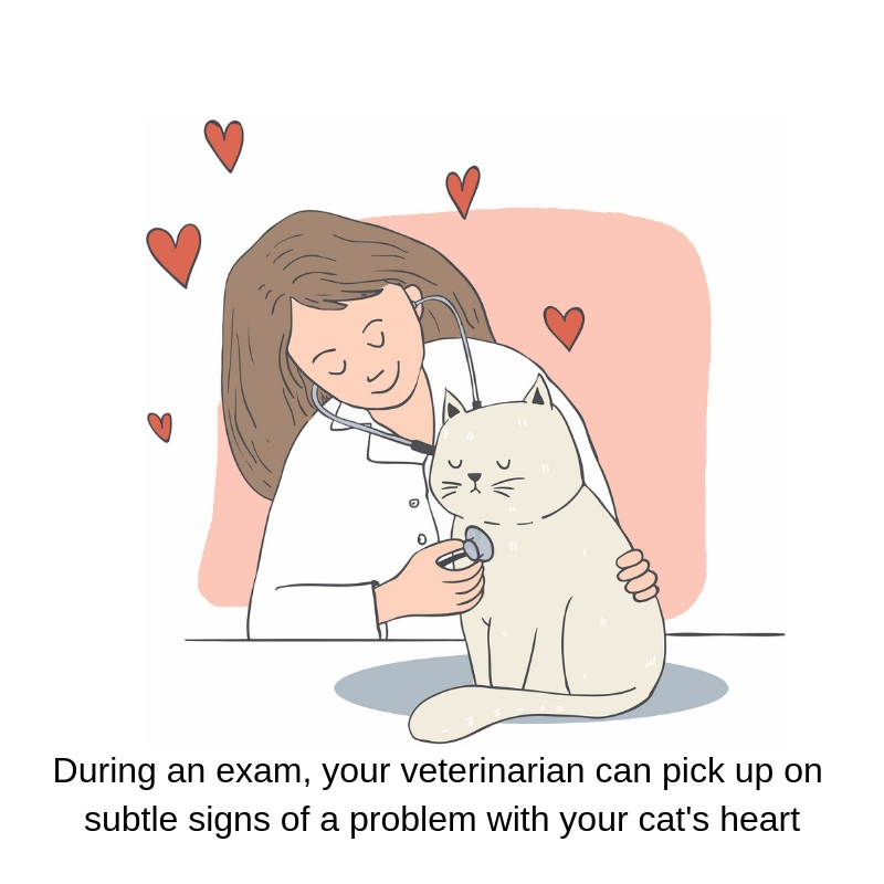 A veterinary exam is important to pick up signs of heart problems in your cat