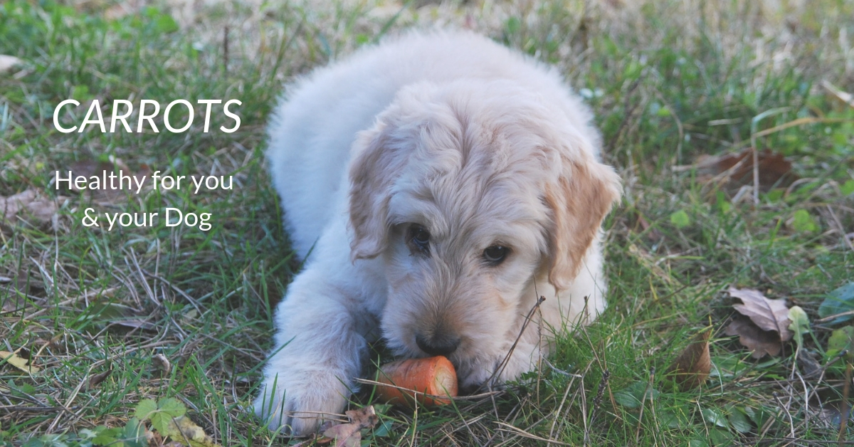 Carrots: Healthy for you and your Dog