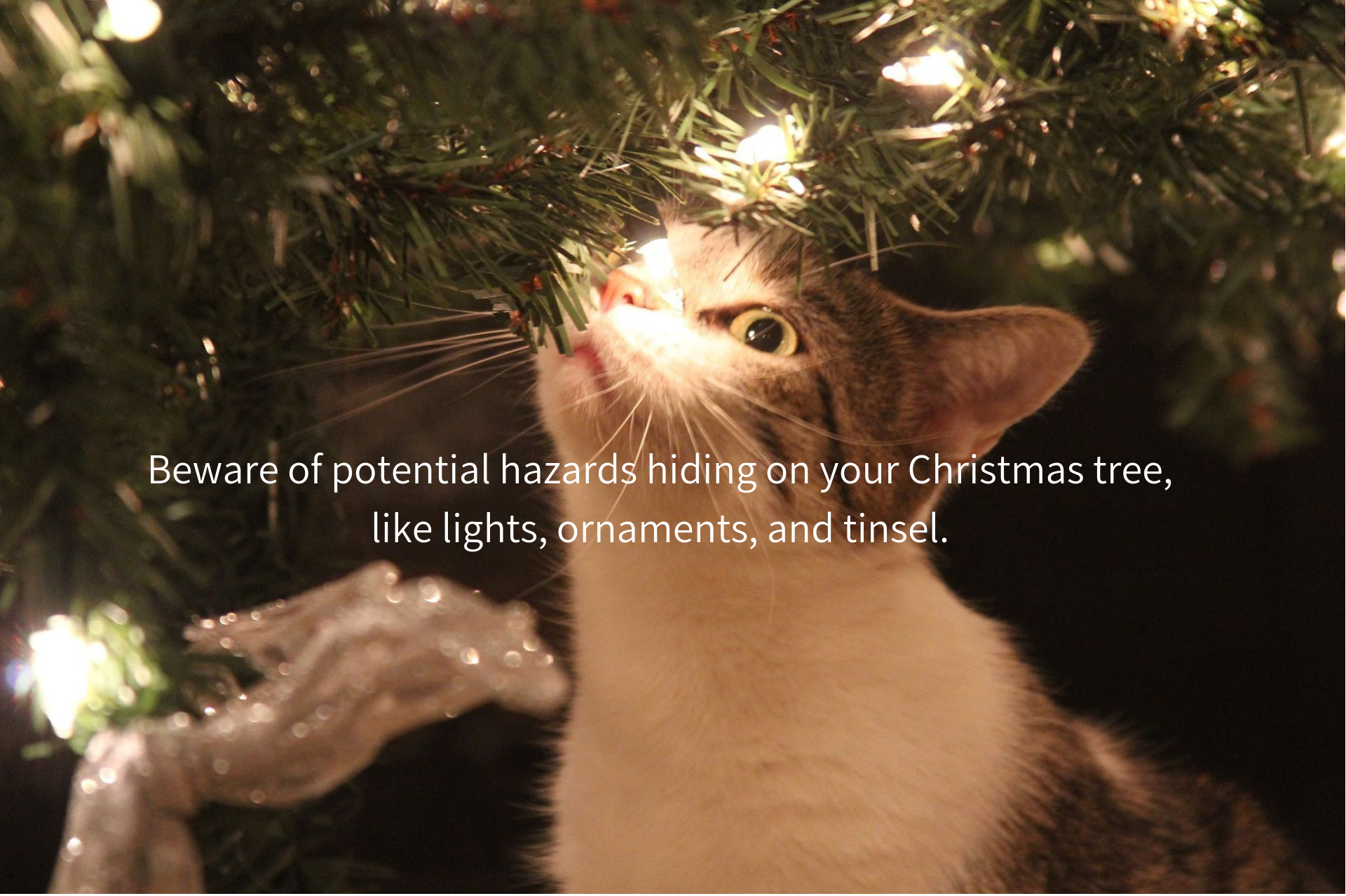 Beware of potential hazards hiding on your tree, like lights, ornaments, and tinsel.