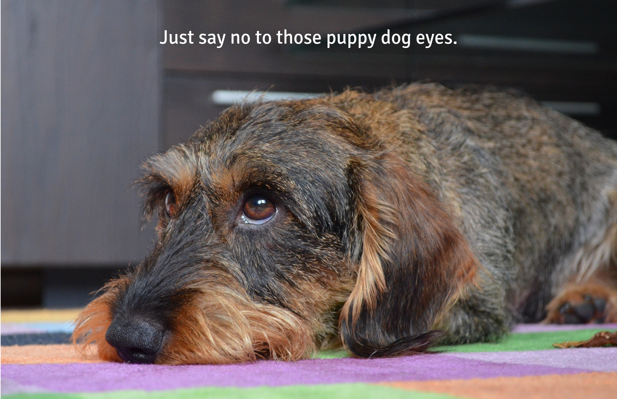 Just say no to those puppy dog eyes.