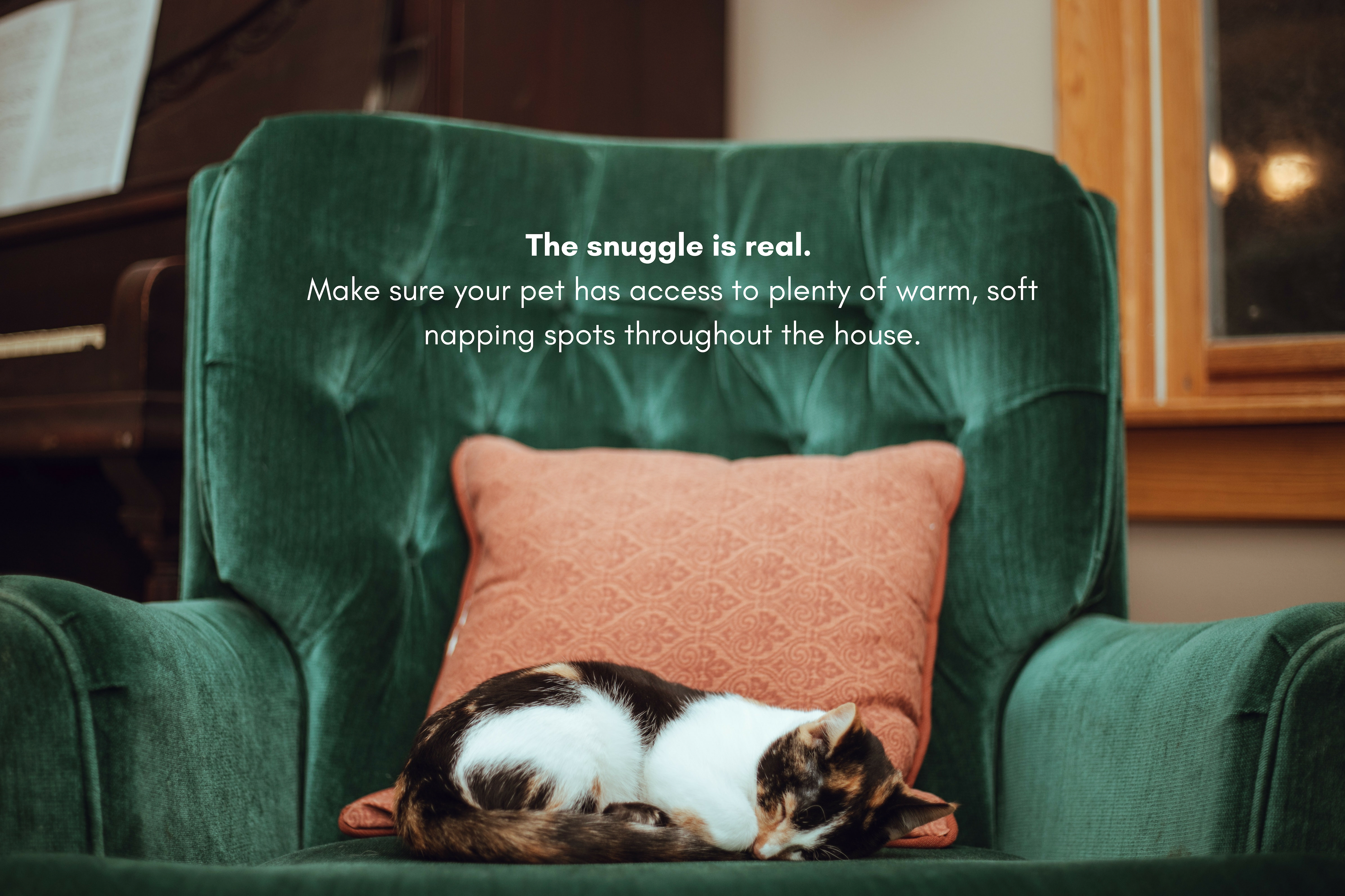 Make sure your pet has access to plenty of warm, soft napping spots throughout the house.
