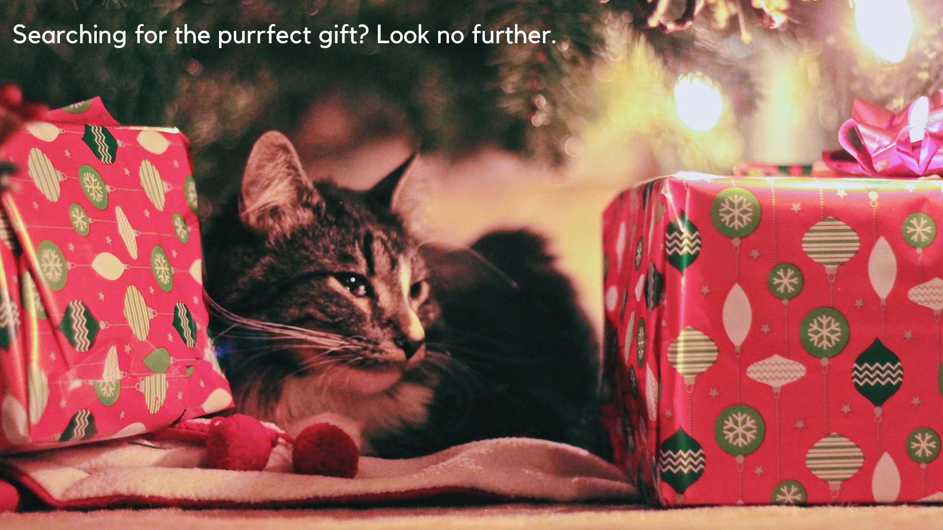 Searching for the purrfect gift? Look no further.