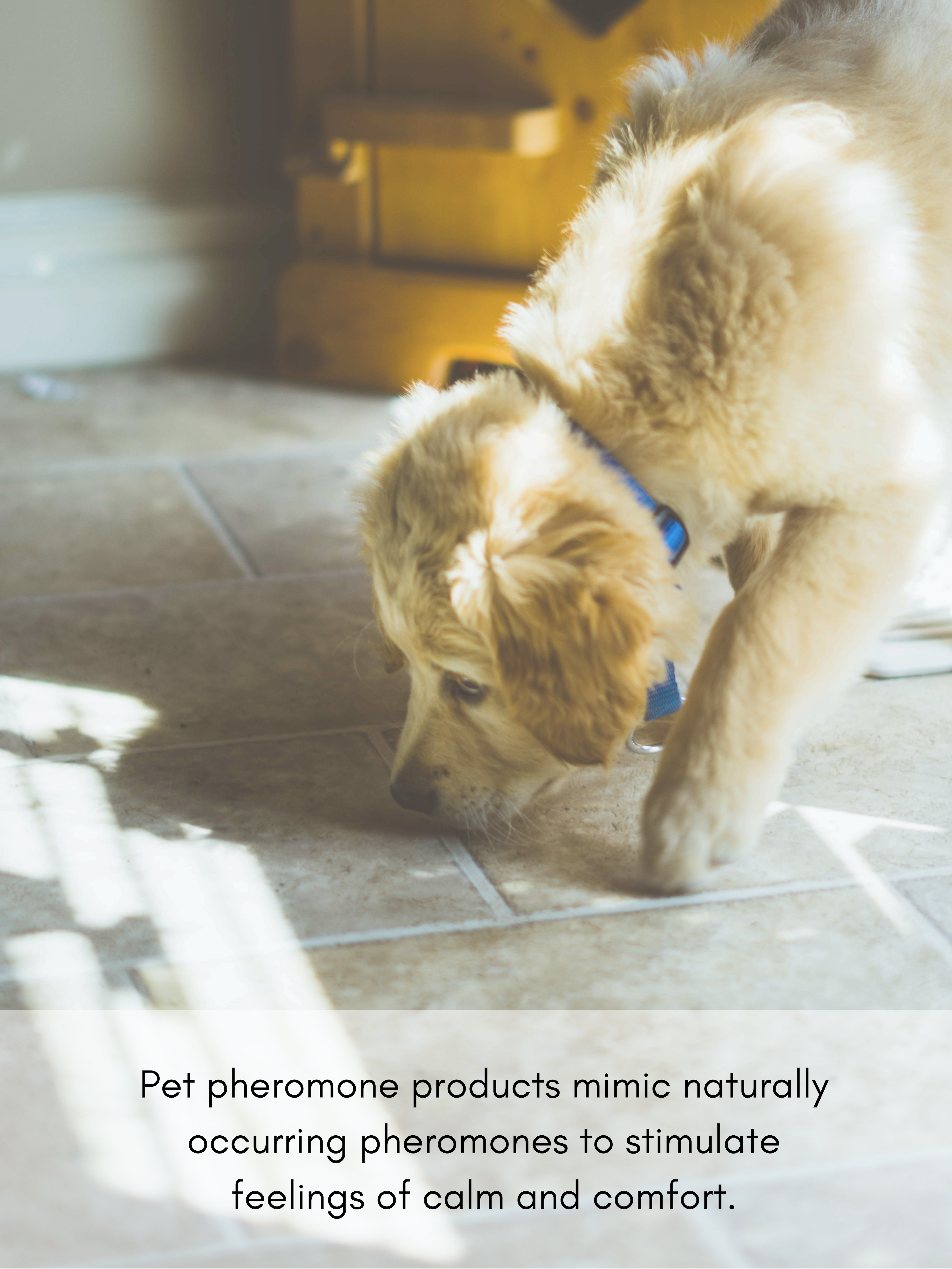 Pet pheromone products mimic naturally occurring pheromones to stimulate feelings of calm and comfort.