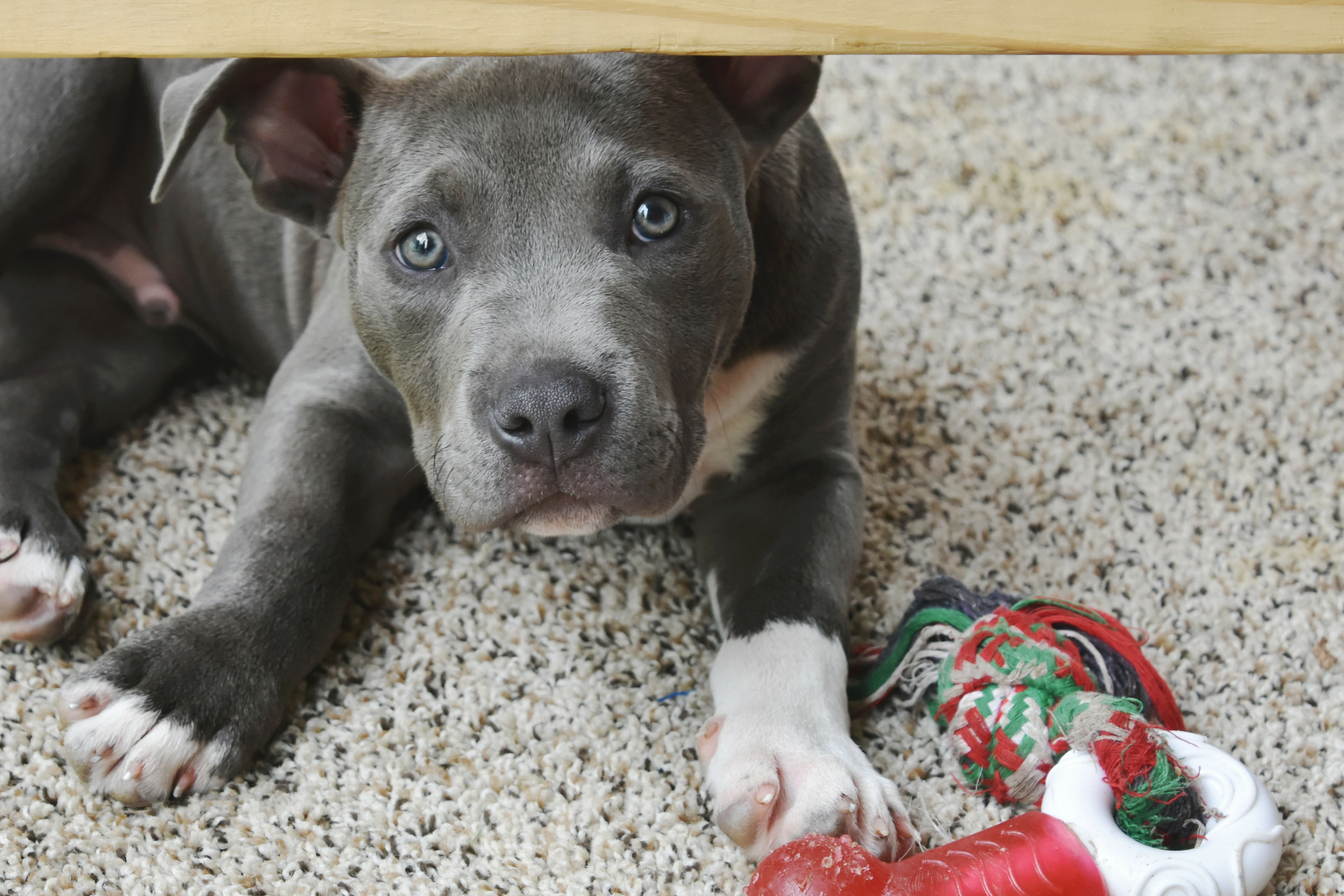 New puppy? Now's the time to consider pet insurance.