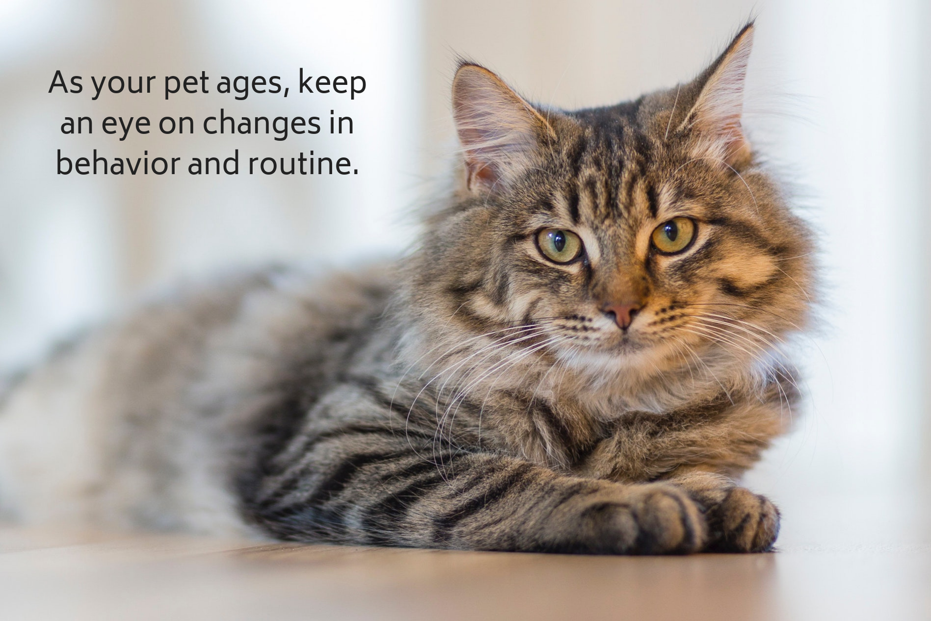As your pet ages, keep an eye on changes in behavior and routine.