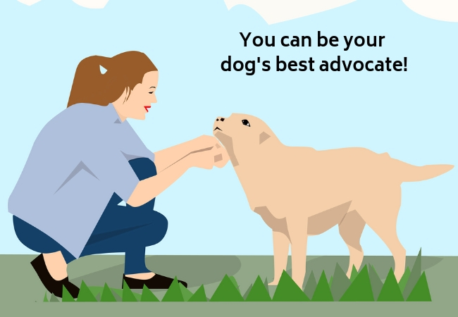 You can be your dog's best advocate!