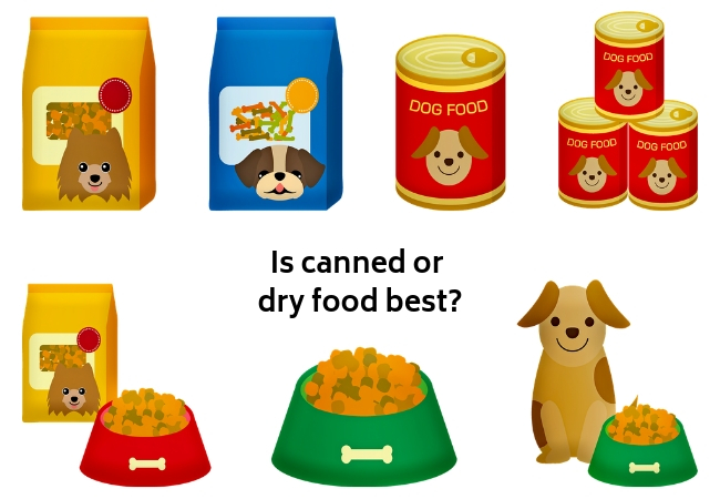 Is canned or dry food best?