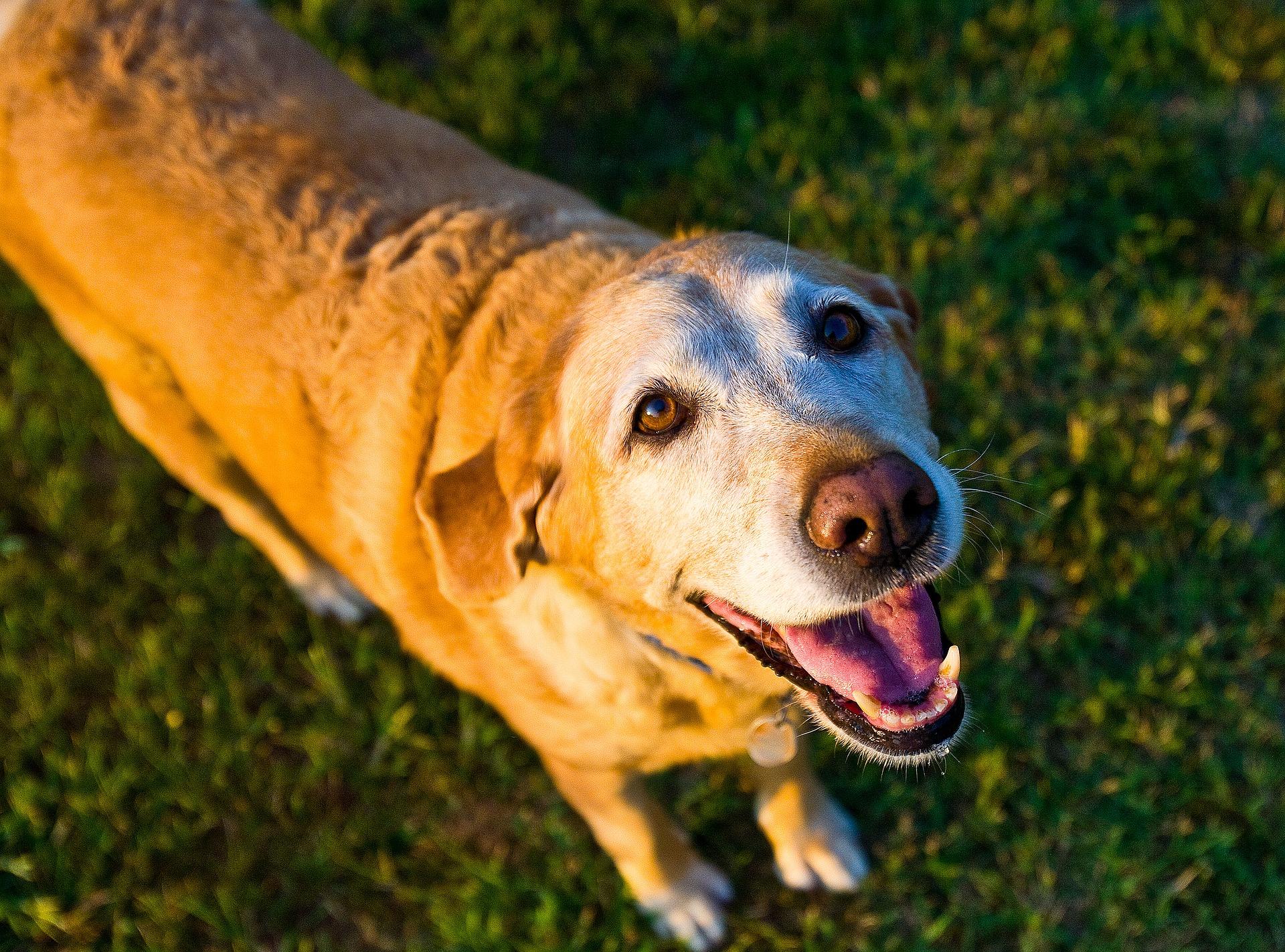 Dog Cardiology - Age or Illness?