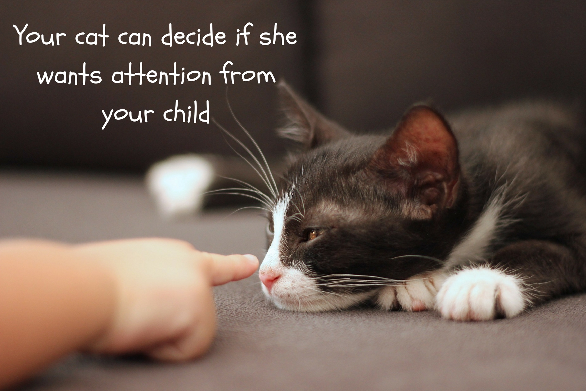 Let the cat decide if attention is OK