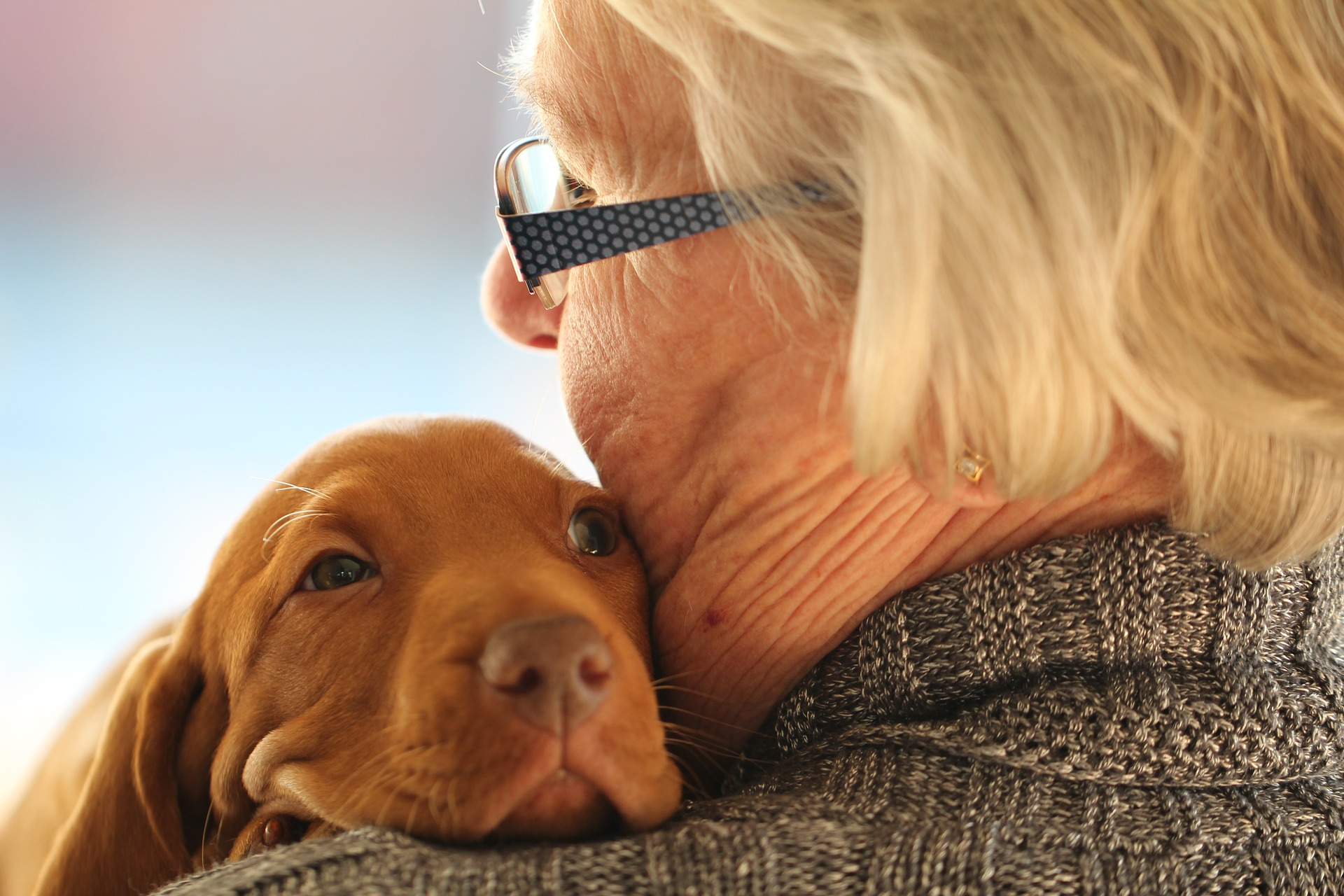 Dogs and reduce stress just through their companionship