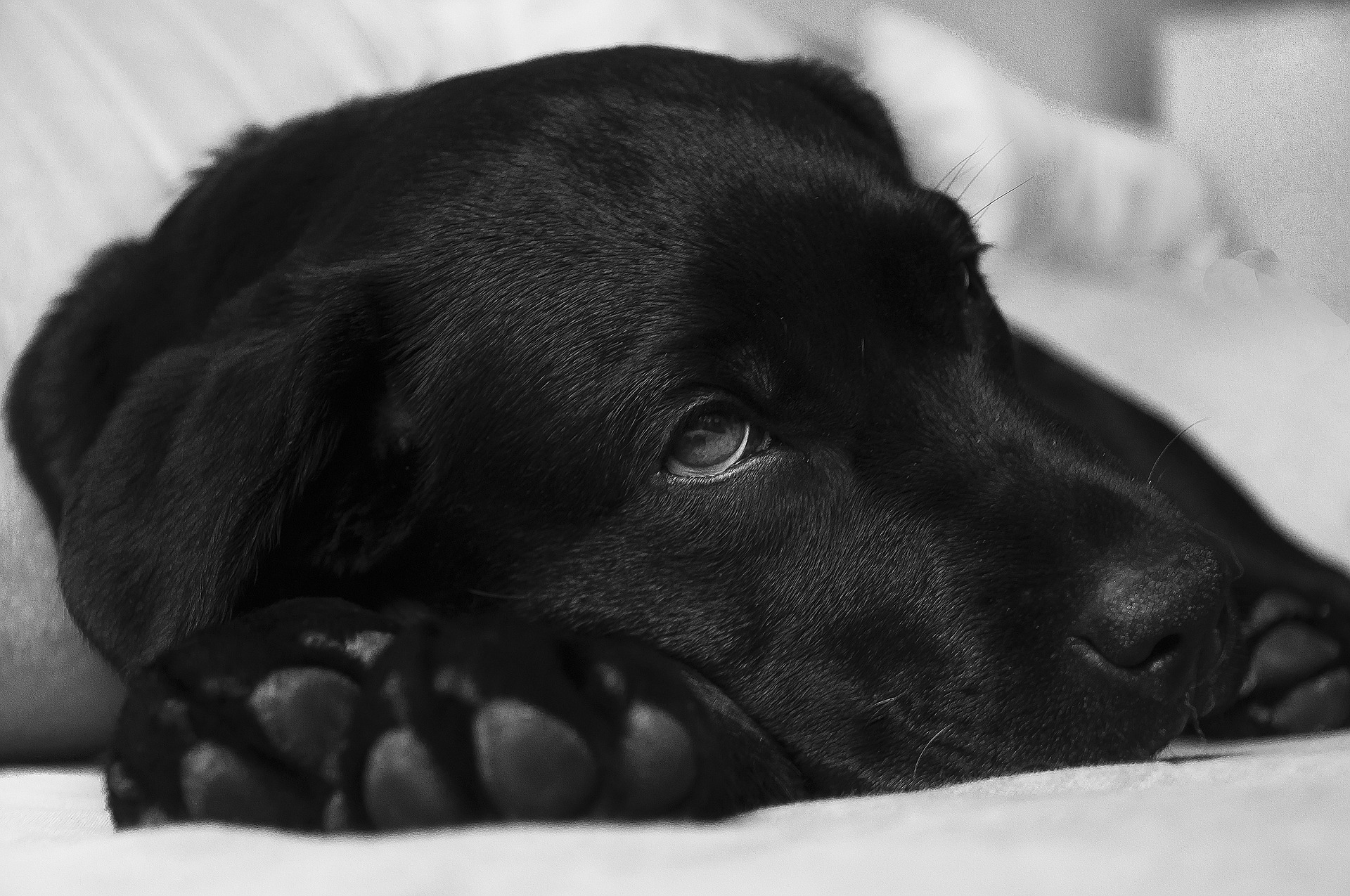 Distemper is a serious, potentially fatal, illness in dogs