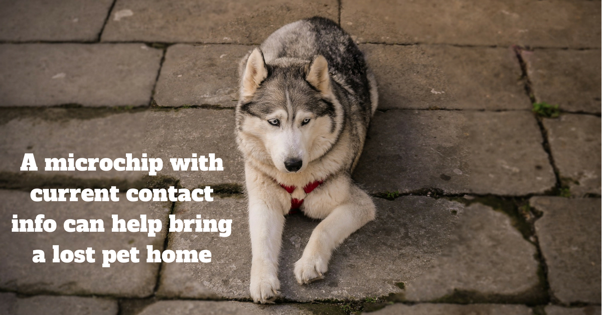 A microchip with current contact info can help bring a lost pet home