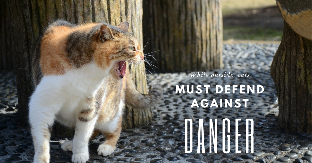 While outside, cats must defend against danger