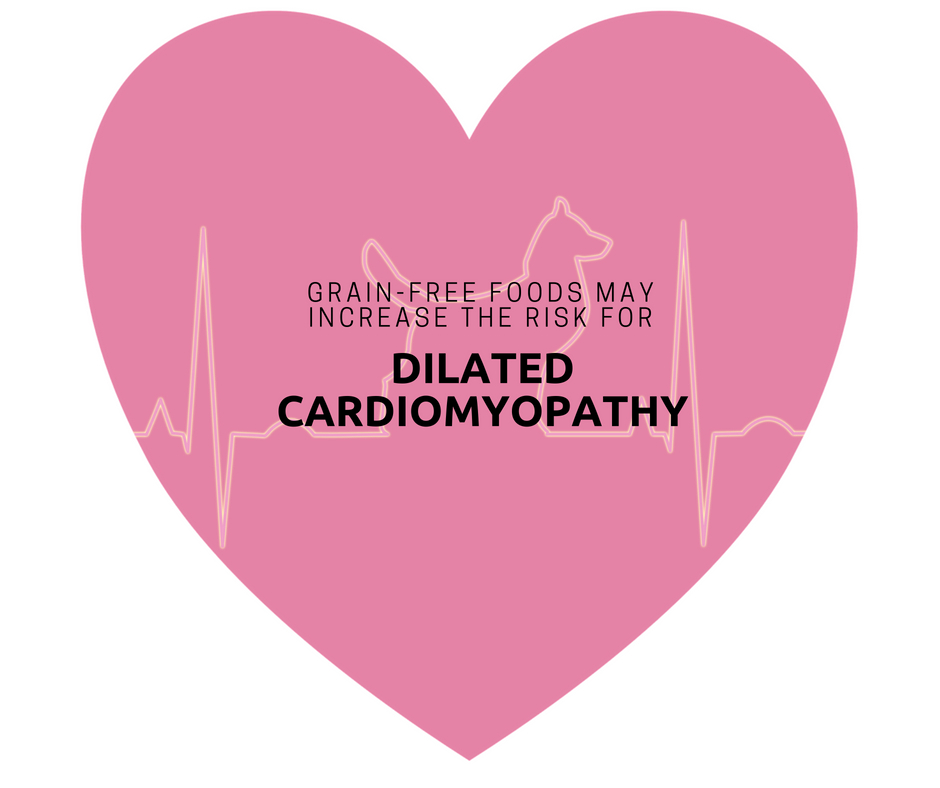 Grain-Free foods may increase the risk for dilated cardiomyopathy