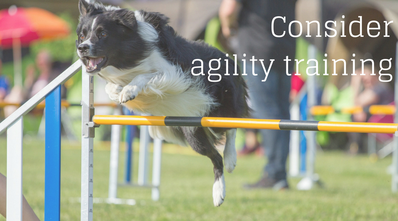 Consider agility training with your dog