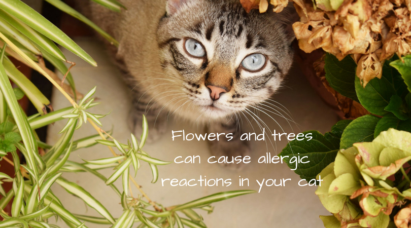 Flowers and trees can cause allergies reactions in your cat
