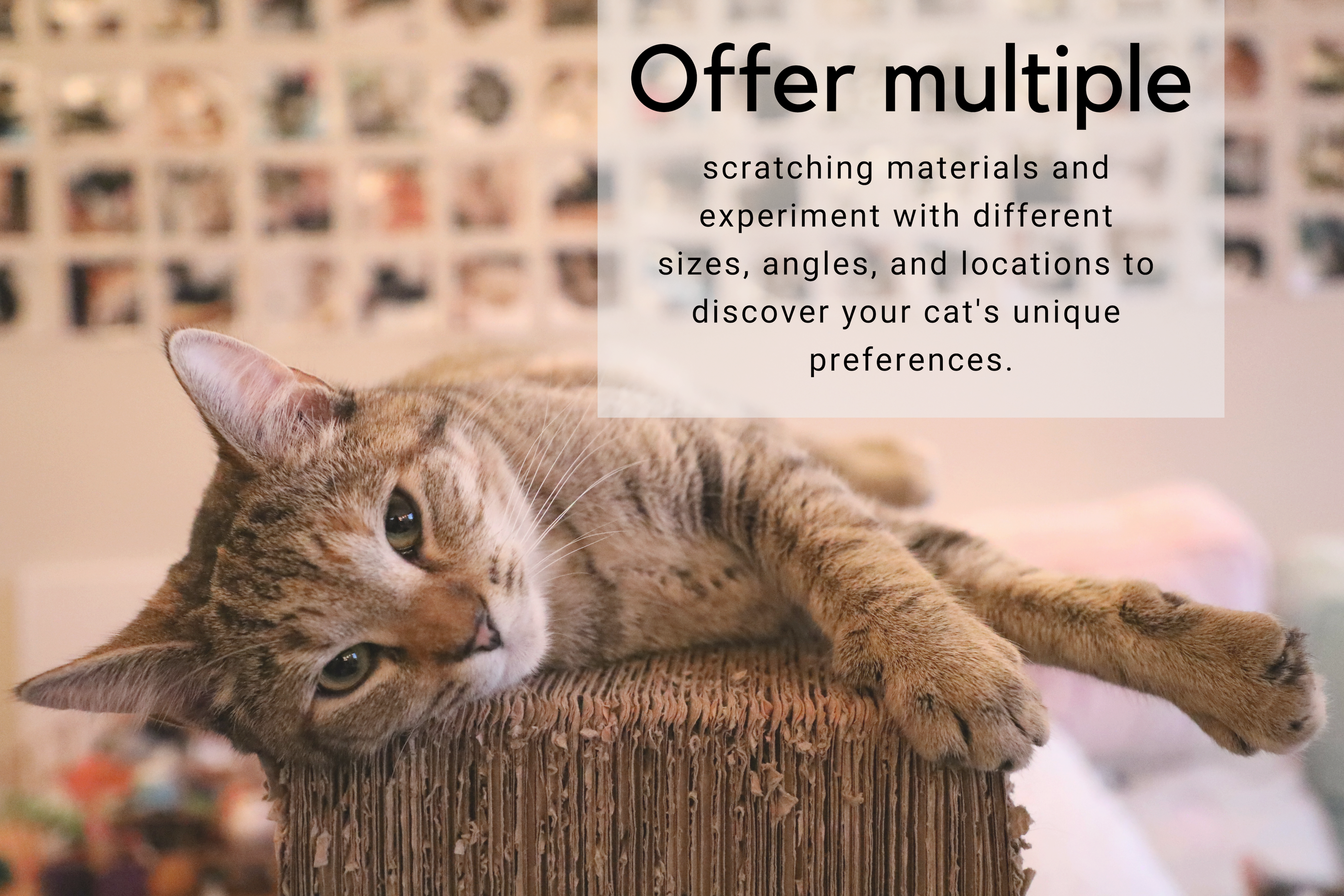Offer multiple scratching materials and experiment with different sizes, angles, and locations to discover your cat's unique preferences.