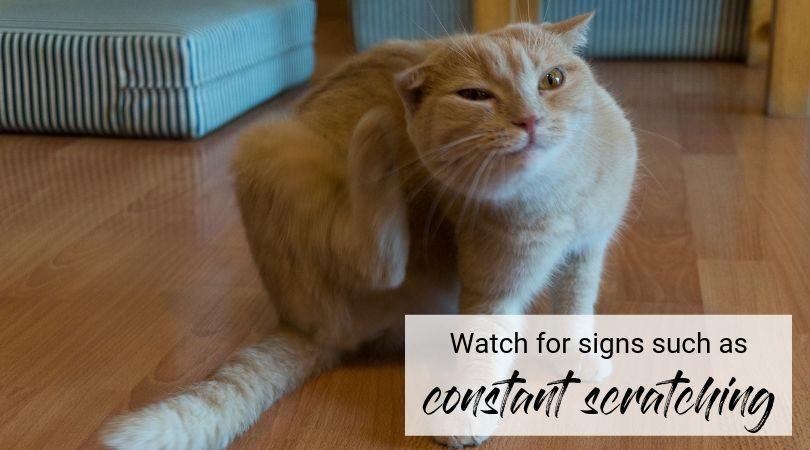 Creepy Crawlies Cats And Ear Mites