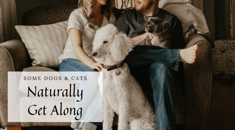 Pet owners on couch with relaxed dog and cat