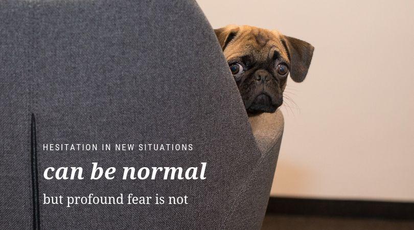 Nervous puppy