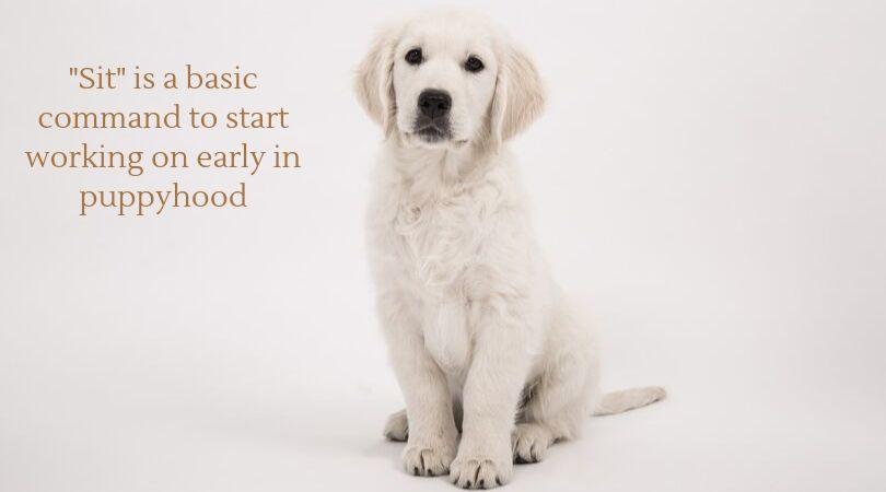A puppy, sitting