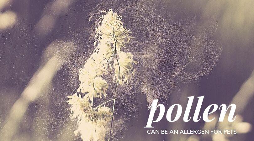 A plant apreading pollen