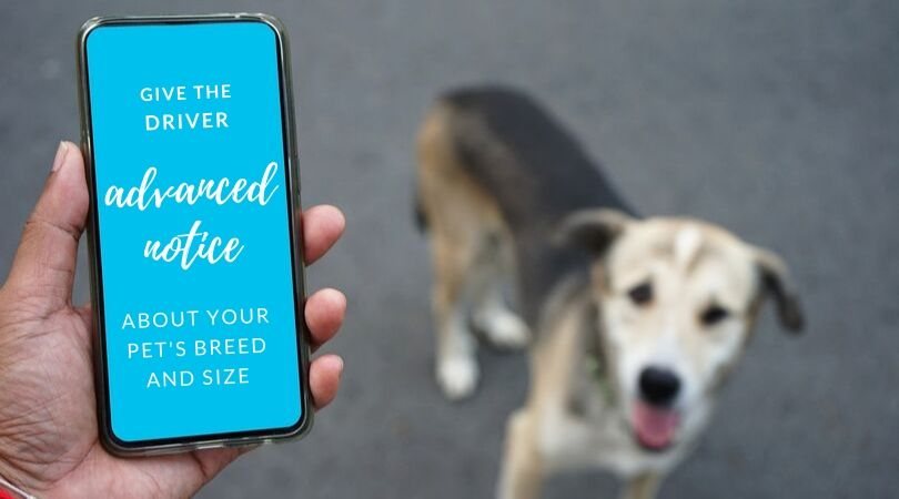 Dog owner looking at smartphone screen