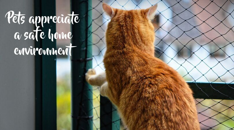 A cat and a latched gate