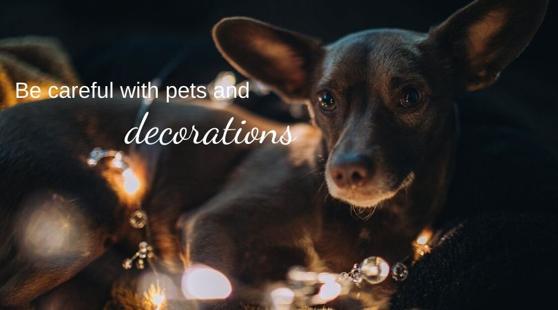 A dog amid holiday lights and decorations