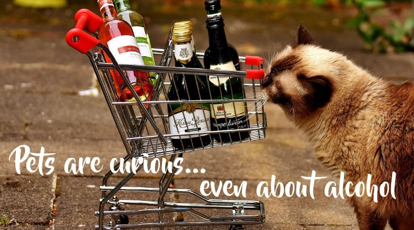 Curious cat and a basket of wine bottles
