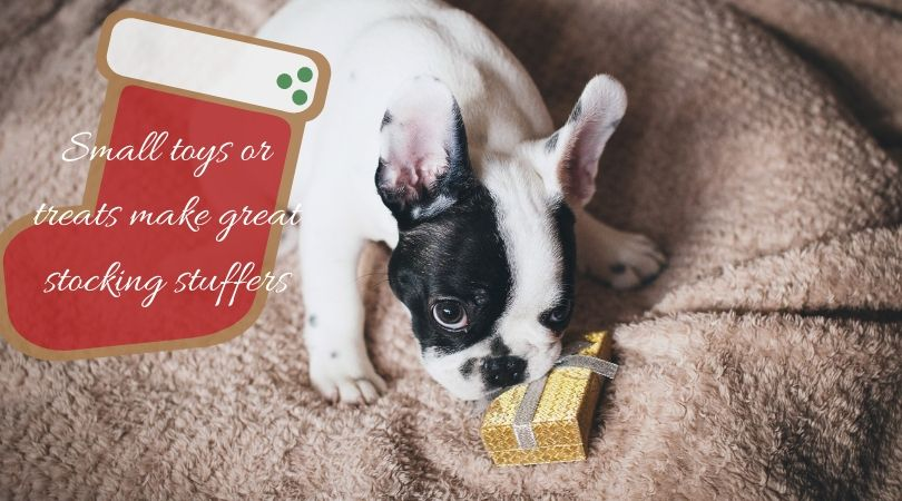 A puppy with a small Christmas gift