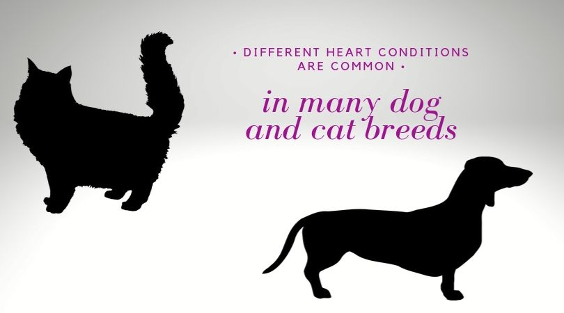 A graphic of a cat and dog silhouette