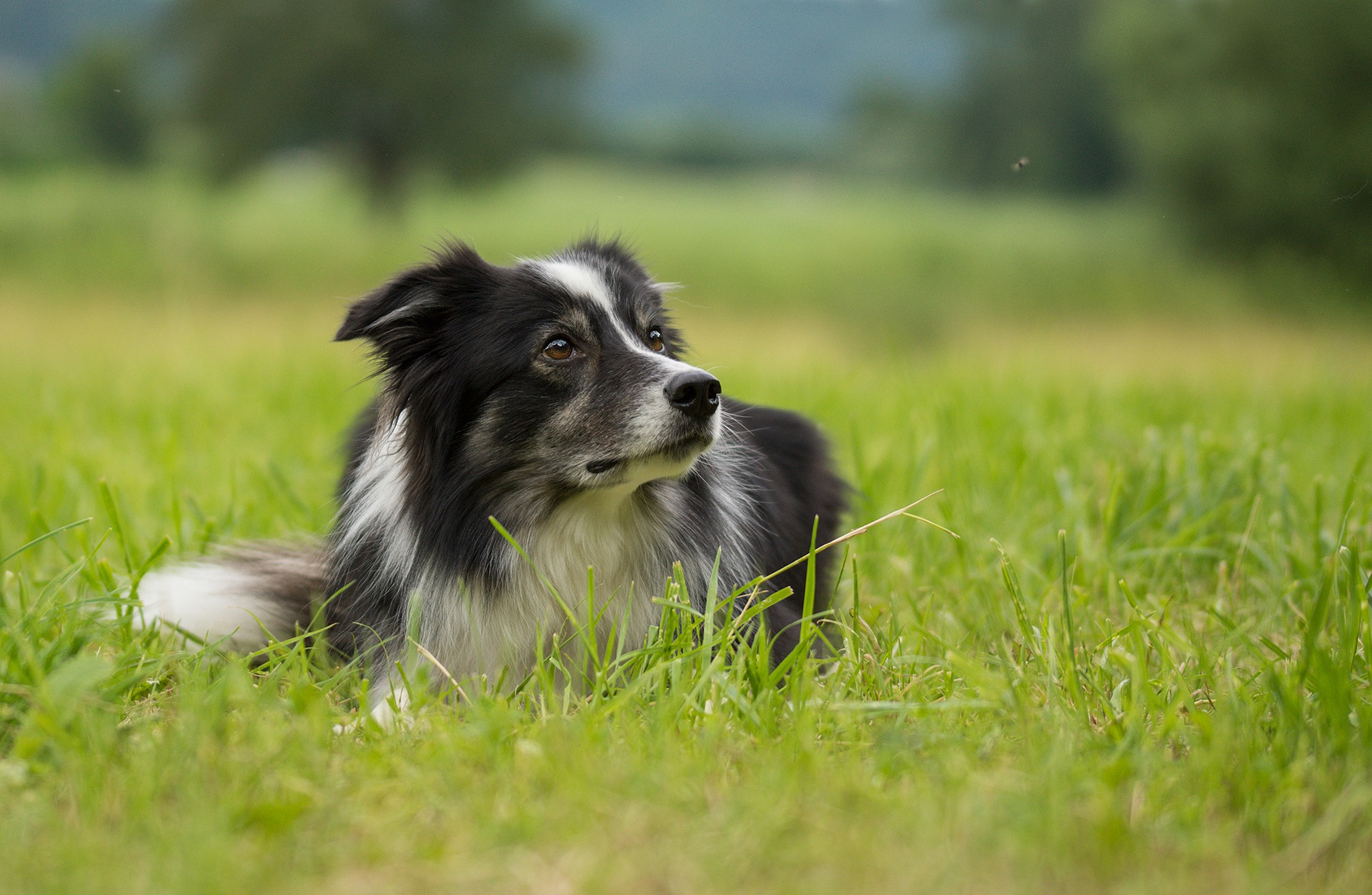 It is important to remember that your pet may remain susceptible to reinfection after treatment, particularly if he goes outdoors.