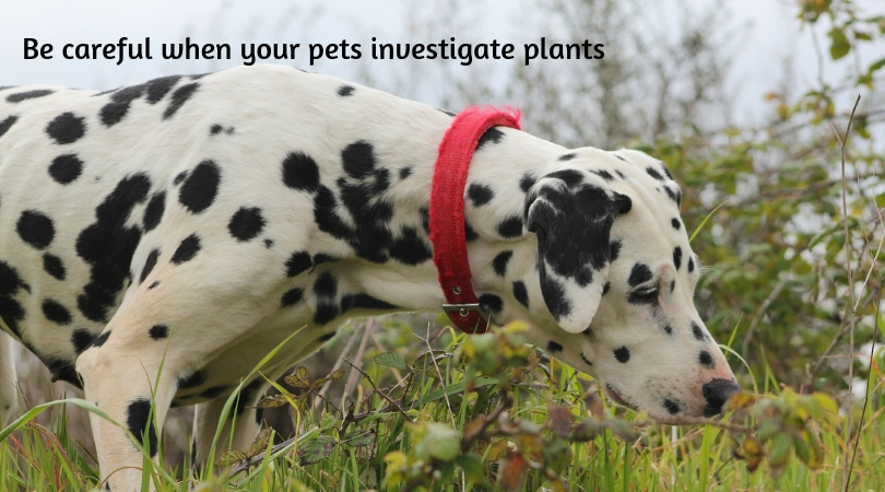 Photo of a dog sniffing an outdoor plant