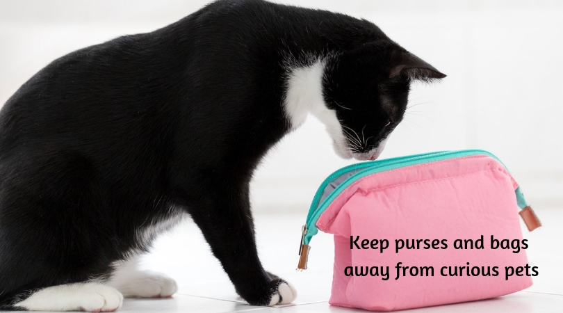 Photo of cat sniffing the inside of a makeup bag