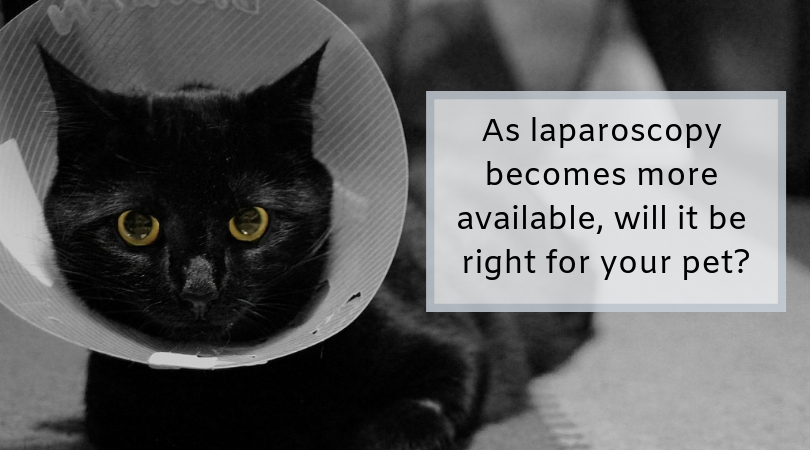 Photo of a cat in an elizabethan collar, recovering from surgery