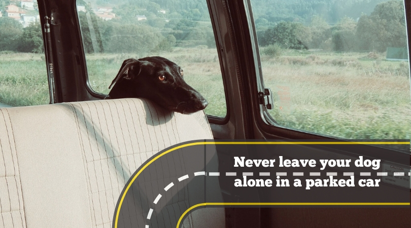 Dog alone in parked car