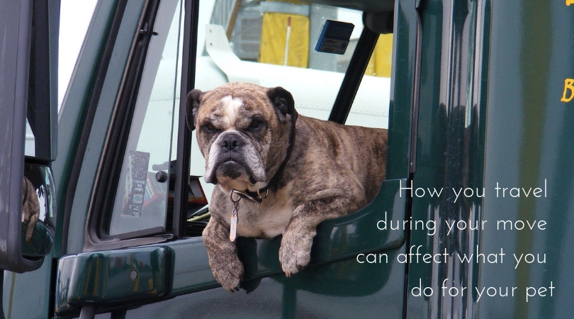 Photo of a dog in the cab of a large truck