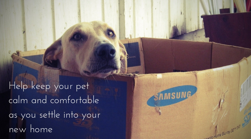 Photo of a dog laying inside a moving box