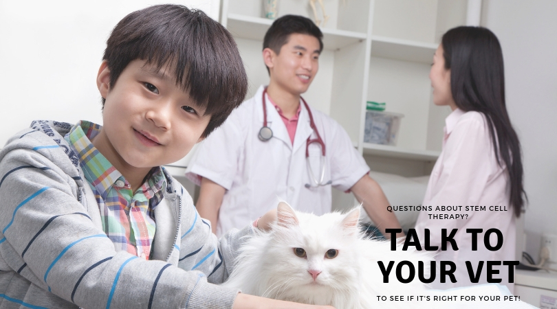 Photo of a cat owner talking to the veterinarian during an appointment