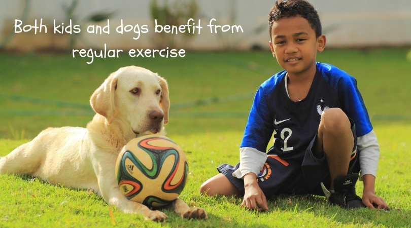 Dog and boy with soccer ball