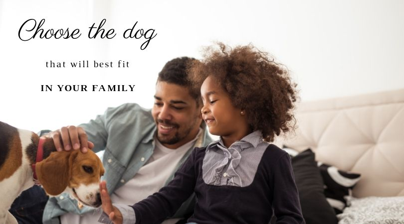 Puppy with family