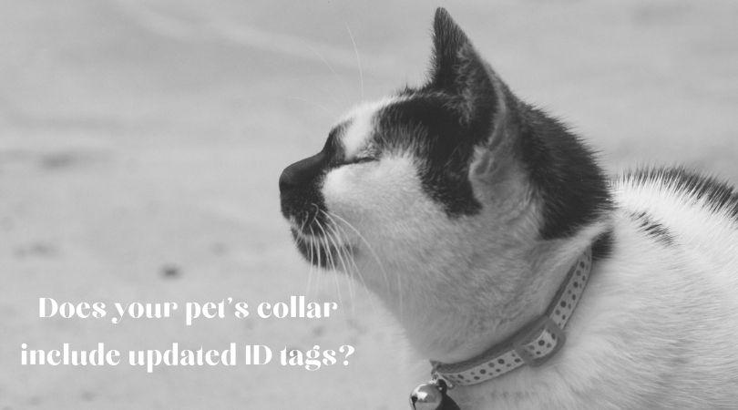 Close up of a cat's collar