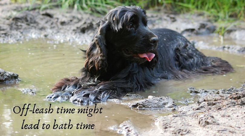 A dog laying in muddy water