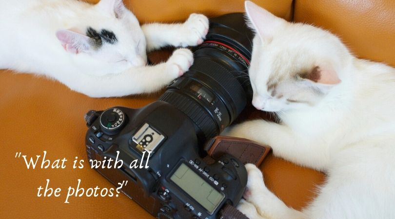 Cats and camera